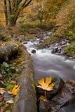 Bobina del fiume comunque la foresta Fotografia Stock Libera da Diritti