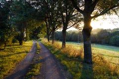 Bobina della strada campestre attraverso una foresta Fotografia Stock
