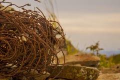Bobina do fio oxidado Fotografia de Stock Royalty Free