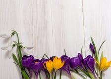 Bobinador em cone do açafrão e snowdrops no fundo de madeira Imagem de Stock Royalty Free