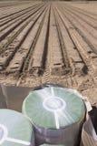 Bobine di nastro dell'irrigazione a goccia vicino alle piantine recentemente piantate fotografia stock