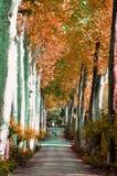Boboli庭院在佛罗伦萨,意大利 库存图片