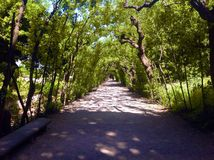 Boboli gardens in Florence, Italy. Green Tunnel in Boboli gardens in Florence, Italy Stock Photography