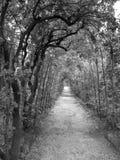 Boboli Gardens Pathway Royalty Free Stock Photos