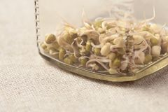 Bobowe flance kawowy kukurudz szklany słój rozlewający stół Neutralny tło Obraz Royalty Free