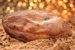 bobowy kakaowy macro fotografia stock