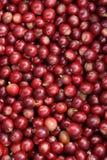 bobowy kawowy świeży Zdjęcie Stock