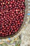 bobowy kawowy świeży zdjęcia stock