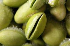 bobowy soya obrazy stock