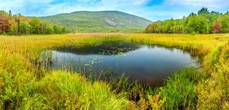 Bobra Grobelny staw w Acadia parku narodowym zdjęcia stock