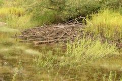 Bobra Hutch w lasu bagnie fotografia stock