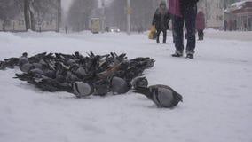 BOBRUISK, BIELORRUSIA - 14 DE ENERO DE 2019: Una multitud de palomas en la ciudad en la parada de autobús, invierno, nevadas fuer almacen de video