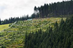 Bobsled kolejki górskiej tobogan w letnim dniu, Rittisberg, Austriaccy Alps Obraz Stock