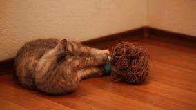 Bobtail kota patrzeć i obsiadanie zbiory