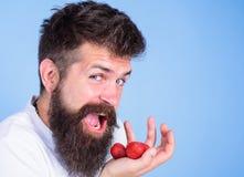 A boca aberta da cara feliz do homem com barba come morangos Queira tentar meu ir alegre do homem da baga comer o doce maduro fotografia de stock royalty free