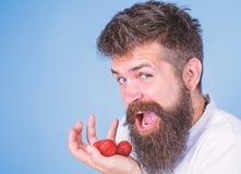A boca aberta da cara feliz do homem com barba come morangos Queira tentar meu ir alegre do homem da baga comer o doce maduro foto de stock