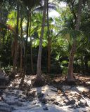 Boca Brava Island Royaltyfri Foto