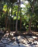 Boca Brava wyspa Zdjęcie Royalty Free