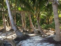 Boca Brava wyspa Obraz Royalty Free