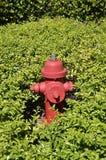 Boca de incêndio de fogo cercada por plantas verdes imagem de stock royalty free