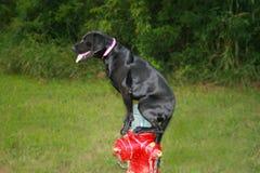 Boca de incêndio do cão e de fogo Fotografia de Stock Royalty Free