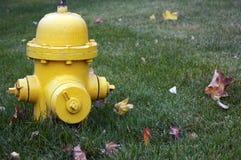 Boca de incendios amarilla en hierba Fotos de archivo libres de regalías