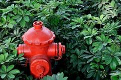 Boca de incendios roja en arbusto verde Fotos de archivo libres de regalías