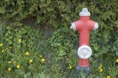 Boca de incendios roja en prado Imágenes de archivo libres de regalías