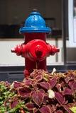 Boca de incendios roja y azul instalada en la capital de Canadá, Ottawa Fotos de archivo