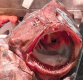 Boca de los pescados Foto de archivo libre de regalías