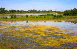 Boca de río de Soca Foto de archivo
