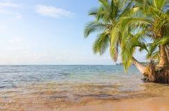 Boca del Drago παραλία, Παναμάς Στοκ φωτογραφία με δικαίωμα ελεύθερης χρήσης