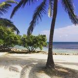 Boca Del Rio Nord-San Pedro Ambergris Caye Lizenzfreie Stockfotos