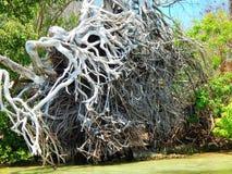 Boca Grande Florida Fotos de archivo libres de regalías