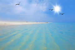 Boca Grandi beach. Turquoise water and white sand at Boca Grandi beach, Aruba Royalty Free Stock Images