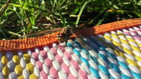 Boca movente da libélula vídeos de arquivo