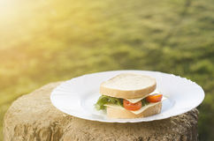 Bocadillo con la ensalada, los tomates, el queso en una madera y el fondo natural La hierba le gusta un fondo y de una luz del so foto de archivo libre de regalías