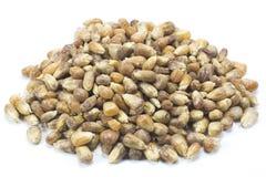 Bocados del maíz, mısır çerezi Fotografía de archivo