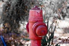 Bocas de incendios en un bosque Foto de archivo