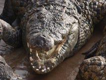 Bocca di un coccodrillo Immagine Stock Libera da Diritti