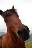 Bocca divertente del cavallo Immagini Stock