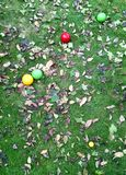 Bocce paulina in Autumn leaves royalty free stock photo