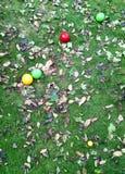Bocce Paulina dans des feuilles d'automne photo libre de droits