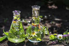 Boccette con le erbe medicinali fotografie stock