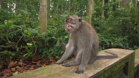Bocejos grandes e riscos do macaco atrás da orelha filme