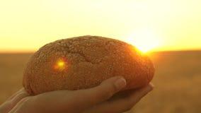 Bochenek chleb w rękach dziewczyna nad pszenicznym polem w promieniach zmierzch smakowity bochenek chleb na palmach ?wie?y zbiory