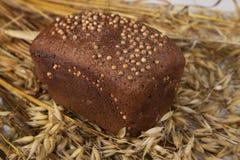 Bochenek domowej roboty chleb z czarnej musztardy ziarnami na stole z żyto owsami i spikelets obraz royalty free