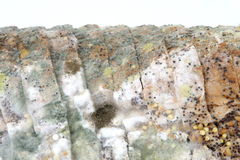 bochenek spleśniały chleb brown Zdjęcia Stock