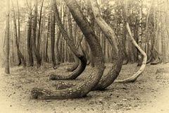 Bochtig bos in Polen stock foto's