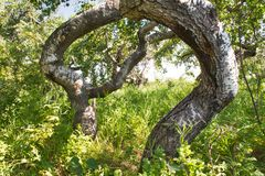Bochtig Bush van Saskatchewan stock fotografie